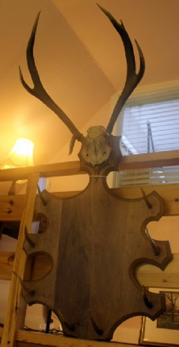 Stag Antler Coat & Hat Rack